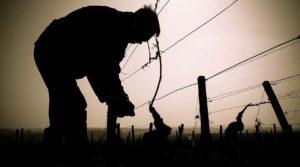Vini Naturali, libera riflessione – Il Vino torna Libero